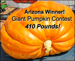 Arizona Giant Pumpkins